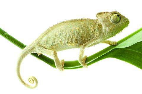 Chameleon adapt change lizard